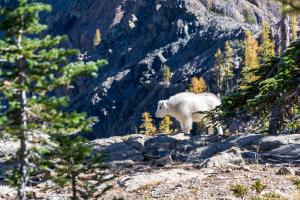 December-Post_Lamb-on-Mountain_web
